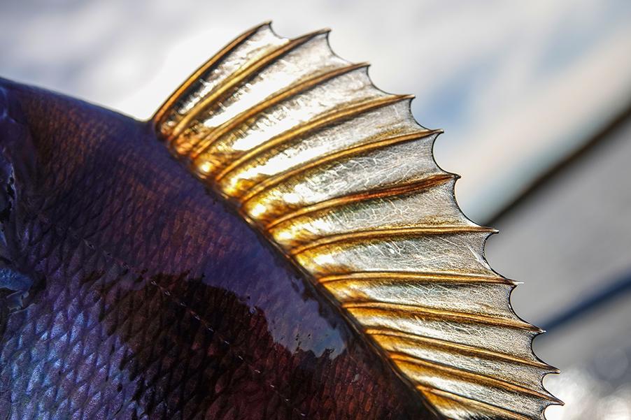 Tietoa Pohjois-Puulan kalastusluvista